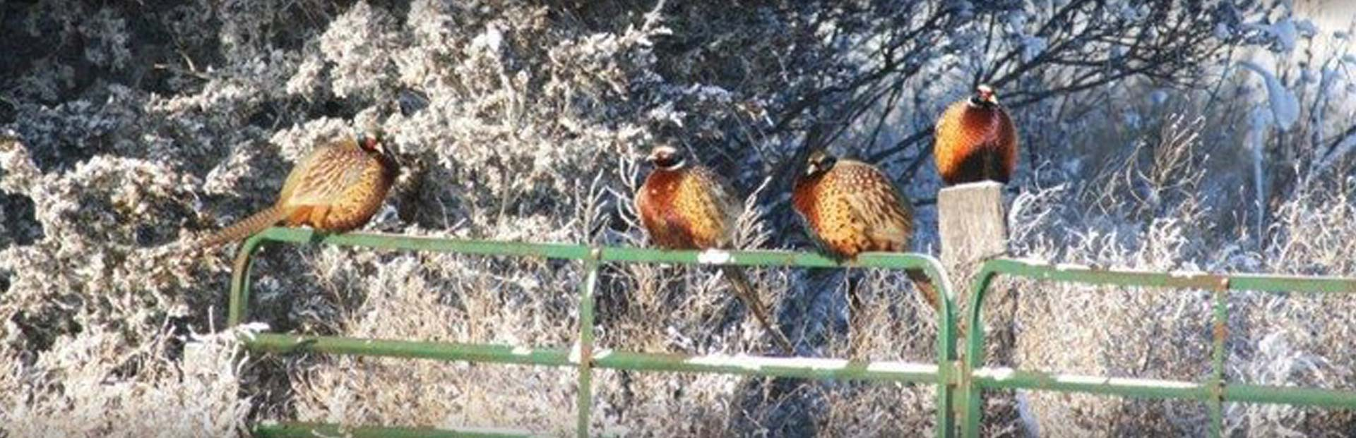 Pheasant City Lodge Videos