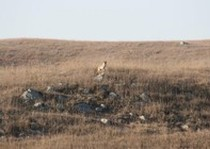 Pheasant City Lodge Scenery Habitat photo gallery.